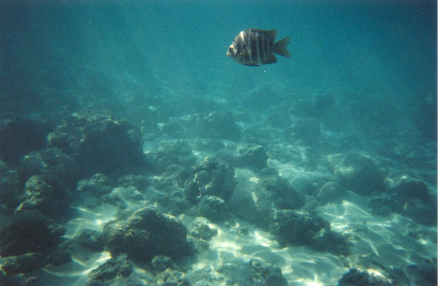 Hanauma Bay reef